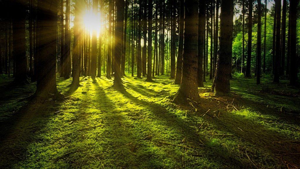 soleil et nature